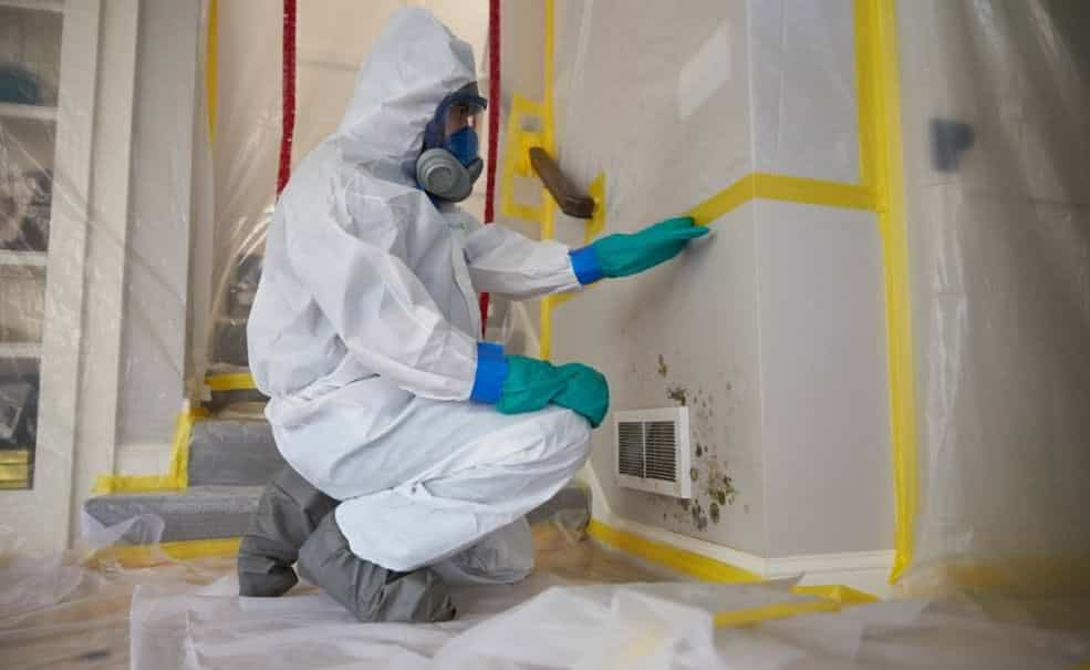 charlotte-mold-damage-removal-tablet-e1506452332339 Mold Remediation
