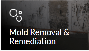 mold removan and remediation in Michigan